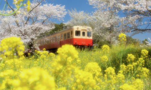 Full-Bloom Railwayの画像