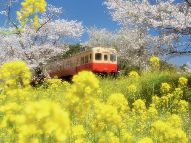 Full-Bloom Railwayの画像