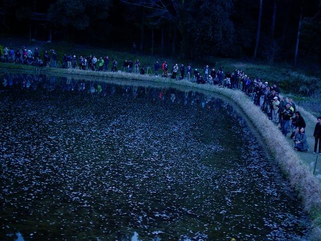 飯給夜桜の戦場の画像