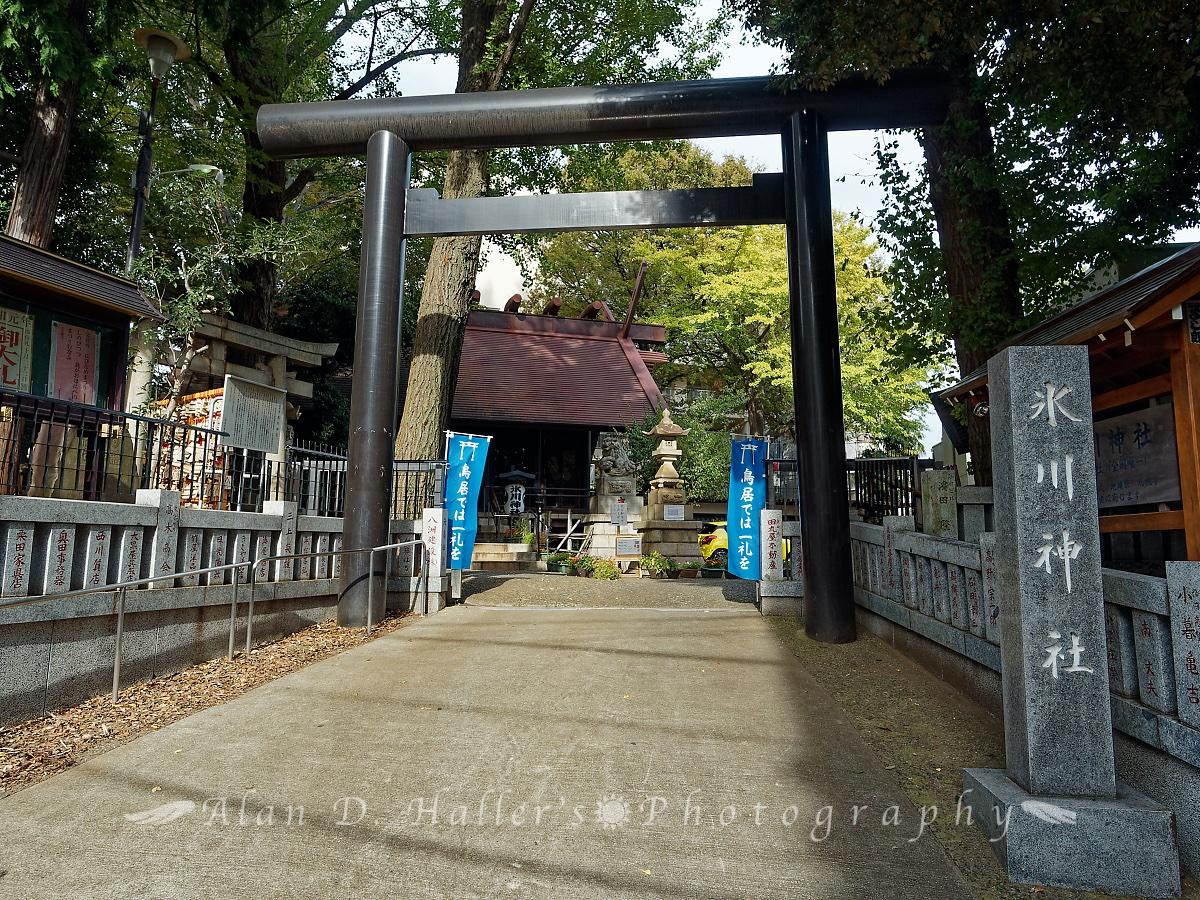 氷川神社の大鳥居の画像