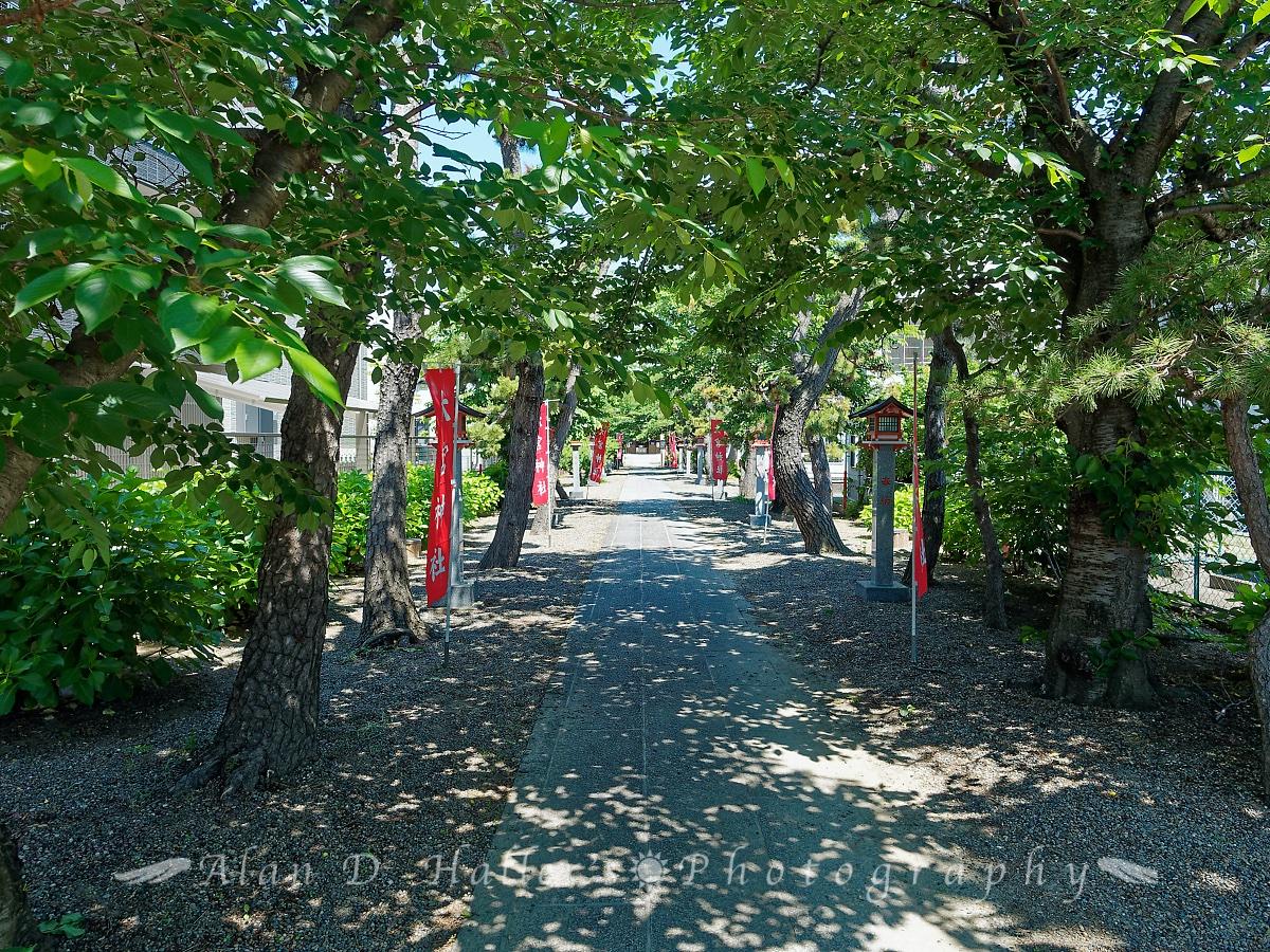 大宮神社の参道の画像