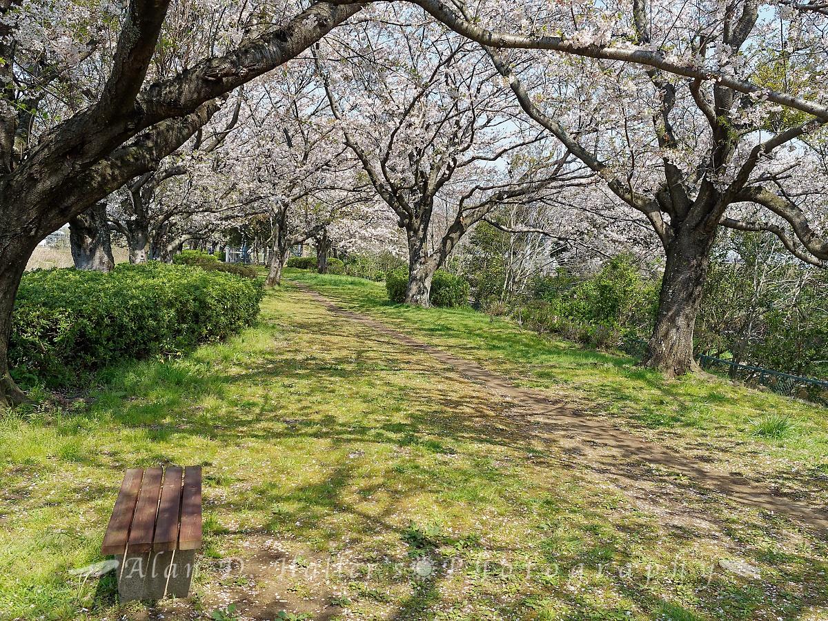 北五井緑道の遊歩道の画像2