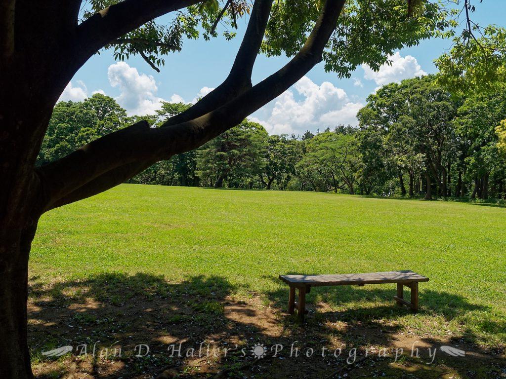 国分寺中央公園の芝